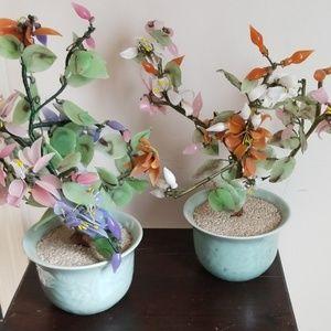 Jade trees.(2)